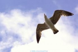 images-65